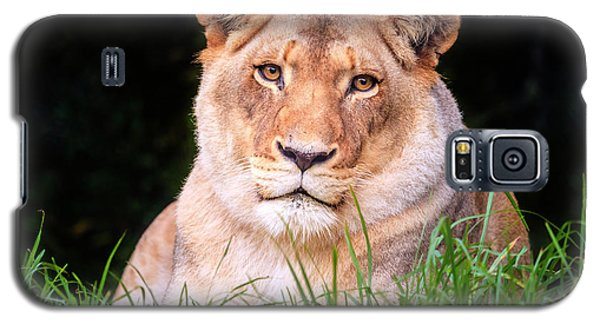 Galaxy S5 Case featuring the photograph White Lion by Alexey Stiop