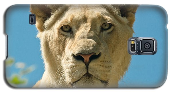 White Lion Galaxy S5 Case by Scott Carruthers