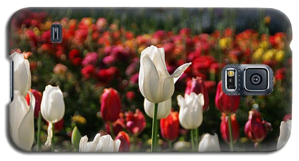 White Lit Tulips Galaxy S5 Case