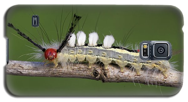 White-marked Tussock Moth 2 Galaxy S5 Case by David Lester