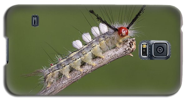 White-marked Tussock Moth Galaxy S5 Case by David Lester