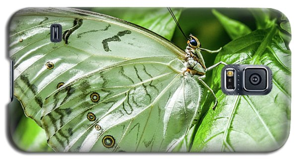Galaxy S5 Case featuring the photograph White Morpho Butterfly by Joann Copeland-Paul