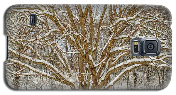 White Oak In Snow Galaxy S5 Case
