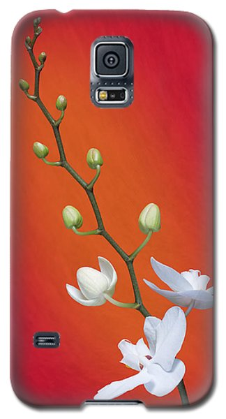 White Orchid Buds On Red Galaxy S5 Case