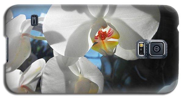 White Orchids Galaxy S5 Case by David Klaboe