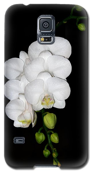 White Orchids On Black Galaxy S5 Case