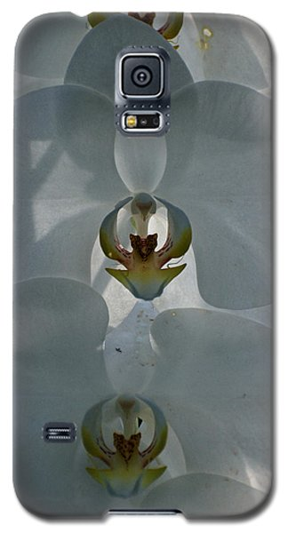 Galaxy S5 Case featuring the photograph White Orchids  by Teresa Blanton