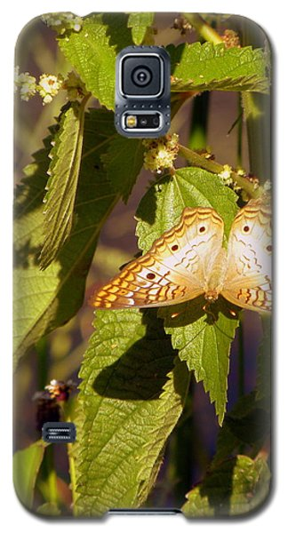 White Peacock Butterfly Galaxy S5 Case by Terri Mills