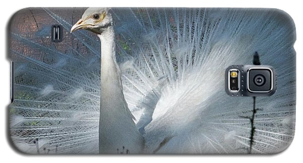 White Peacock Galaxy S5 Case by Lamarre Labadie