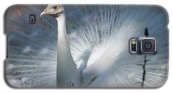 White Peacock Galaxy S5 Case