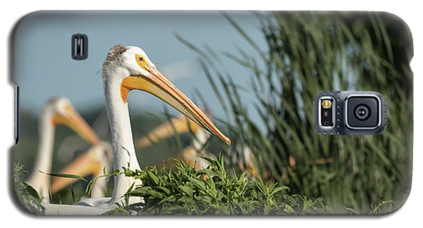 Galaxy S5 Case featuring the photograph White Pelican 7-2015 by Thomas Young