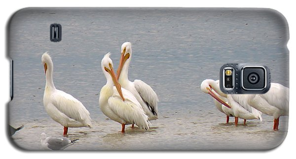 White Pelicans And Friends Galaxy S5 Case by Rosalie Scanlon