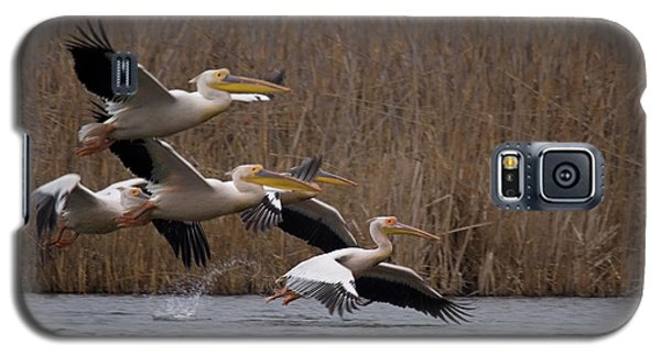 White Pelicans In Flight Over Lake Galaxy S5 Case