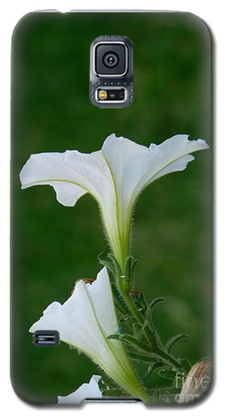 White Petunia Blossoms Galaxy S5 Case