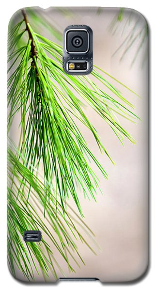 Galaxy S5 Case featuring the photograph White Pine Branch by Christina Rollo
