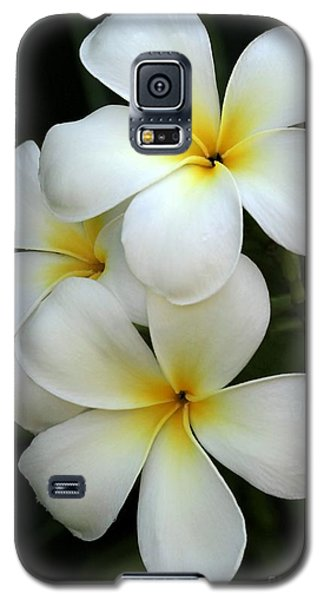 White Plumeria Galaxy S5 Case
