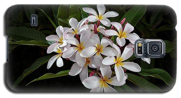 White Plumerias In Bloom Galaxy S5 Case