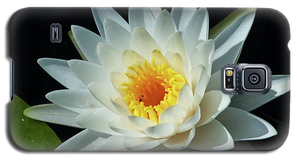 Galaxy S5 Case featuring the photograph White Pond Lily by Arthur Dodd