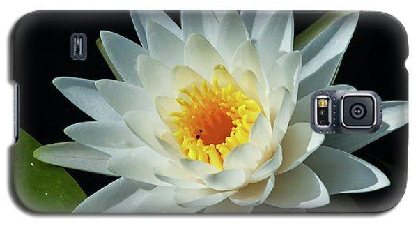 White Pond Lily Galaxy S5 Case by Arthur Dodd