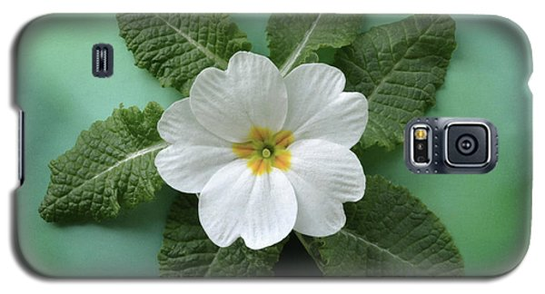 Galaxy S5 Case featuring the photograph White Primrose by Terence Davis