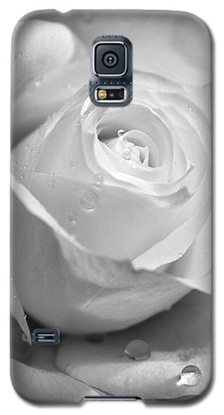 White Rose Galaxy S5 Case by Brian Roscorla
