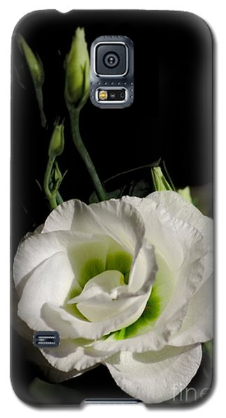 White Rose On Black Galaxy S5 Case