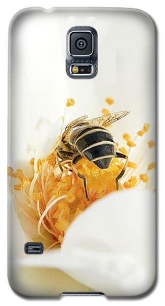 Looking For Gold In A White Rose Galaxy S5 Case