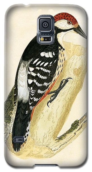 White Rumped Woodpecker Galaxy S5 Case by English School