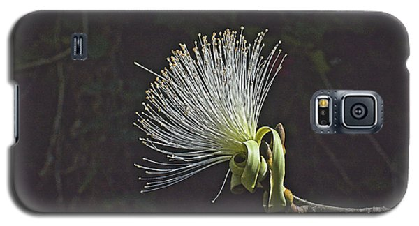 White Shaving Brush Pseudobombax Flower Galaxy S5 Case
