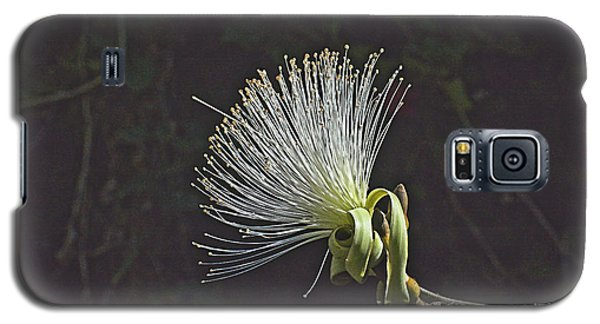White Shaving Brush Pseudobombax Flower Galaxy S5 Case