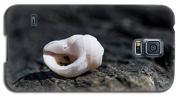 White Shell Galaxy S5 Case
