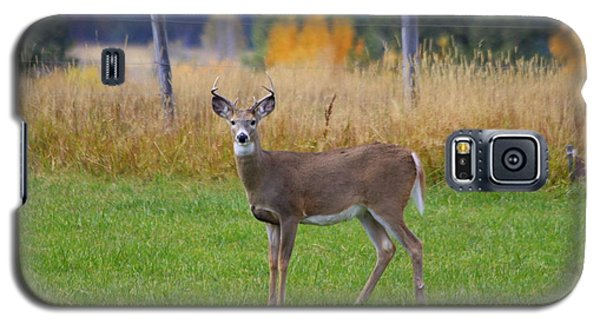 Galaxy S5 Case featuring the photograph White Tail Dear  by Irina Hays