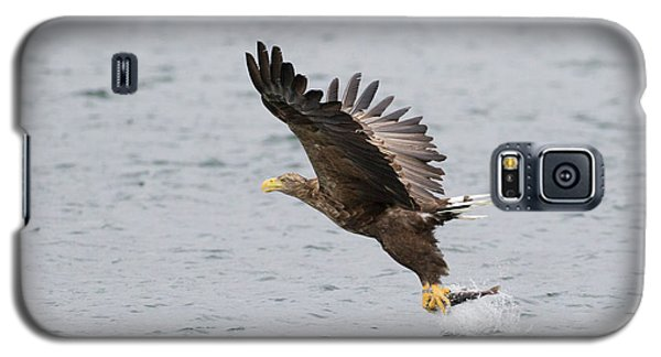 White-tailed Eagle Catching Dinner Galaxy S5 Case