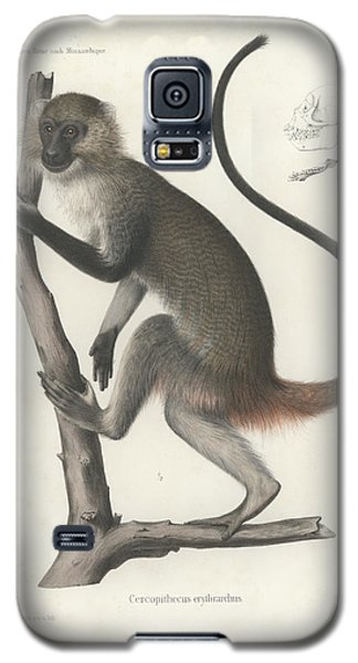 White Throated Guenon, Cercopithecus Albogularis Erythrarchus Galaxy S5 Case by J D L Franz Wagner