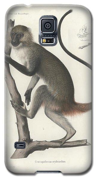 White Throated Guenon, Cercopithecus Albogularis Erythrarchus Galaxy S5 Case