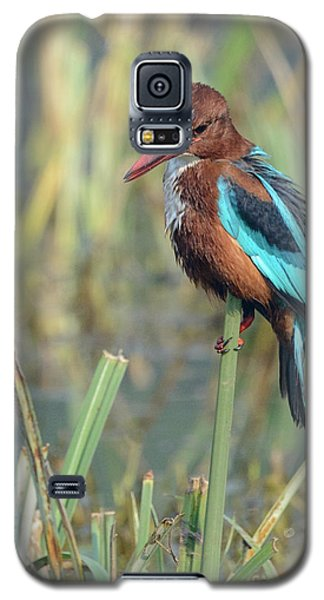 White-throated Kingfisher 13 Galaxy S5 Case