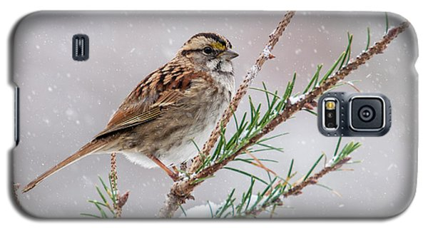 White Throated Sparrow Galaxy S5 Case