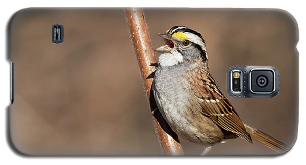 Galaxy S5 Case featuring the photograph White-throated Sparrow by Mircea Costina Photography