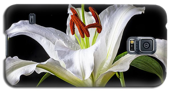 White Tiger Lily Still Life Galaxy S5 Case by Garry Gay