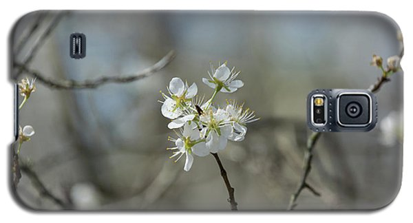 White Tree Bud Galaxy S5 Case