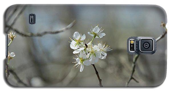 White Tree Bud Galaxy S5 Case