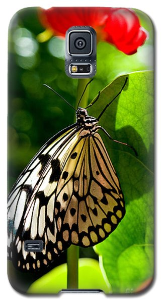 White Tree Nymph Butterfly 1 Galaxy S5 Case