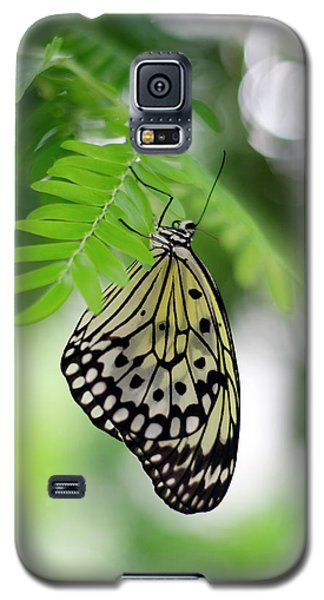 White Tree Nymph Butterfly 2 Galaxy S5 Case by Marie Hicks