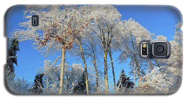 White Trees Clear Skies Galaxy S5 Case