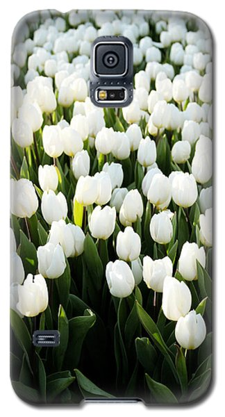 Tulip Galaxy S5 Case - White Tulips In The Garden by Linda Woods