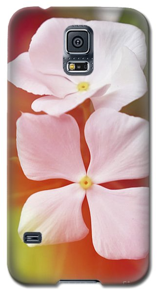 White Vinca With Vivid Highligts  Galaxy S5 Case