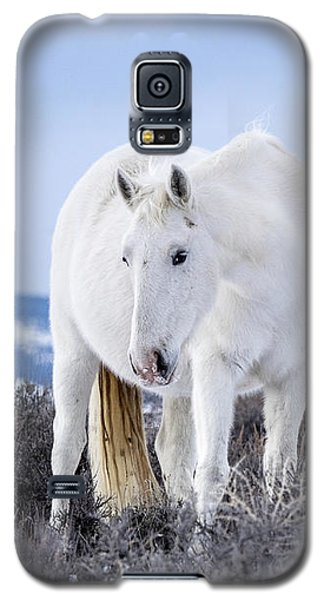 White Wild Horse Mystic Of Sand Wash Basin Galaxy S5 Case