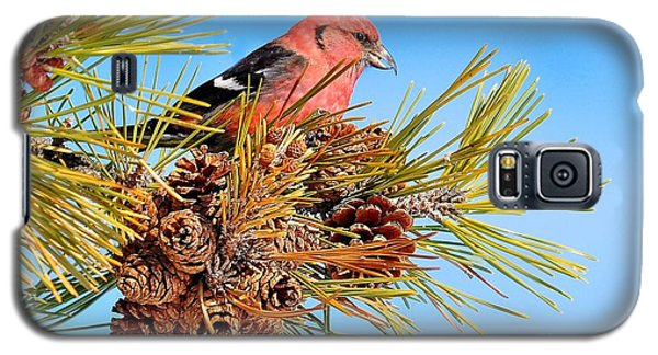 Galaxy S5 Case featuring the photograph White-winged Crossbill by Debbie Stahre