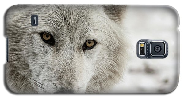 White Wolf II Galaxy S5 Case