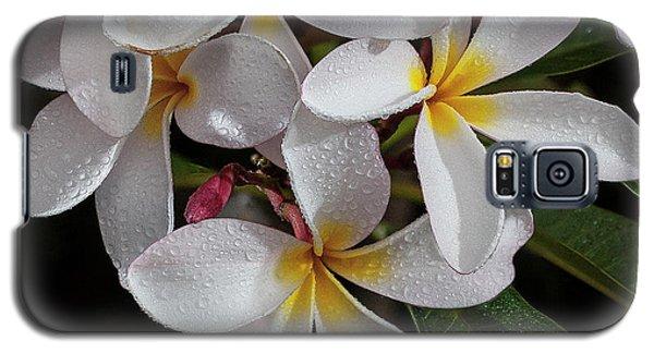 White/yellow Plumerias In Bloom Galaxy S5 Case